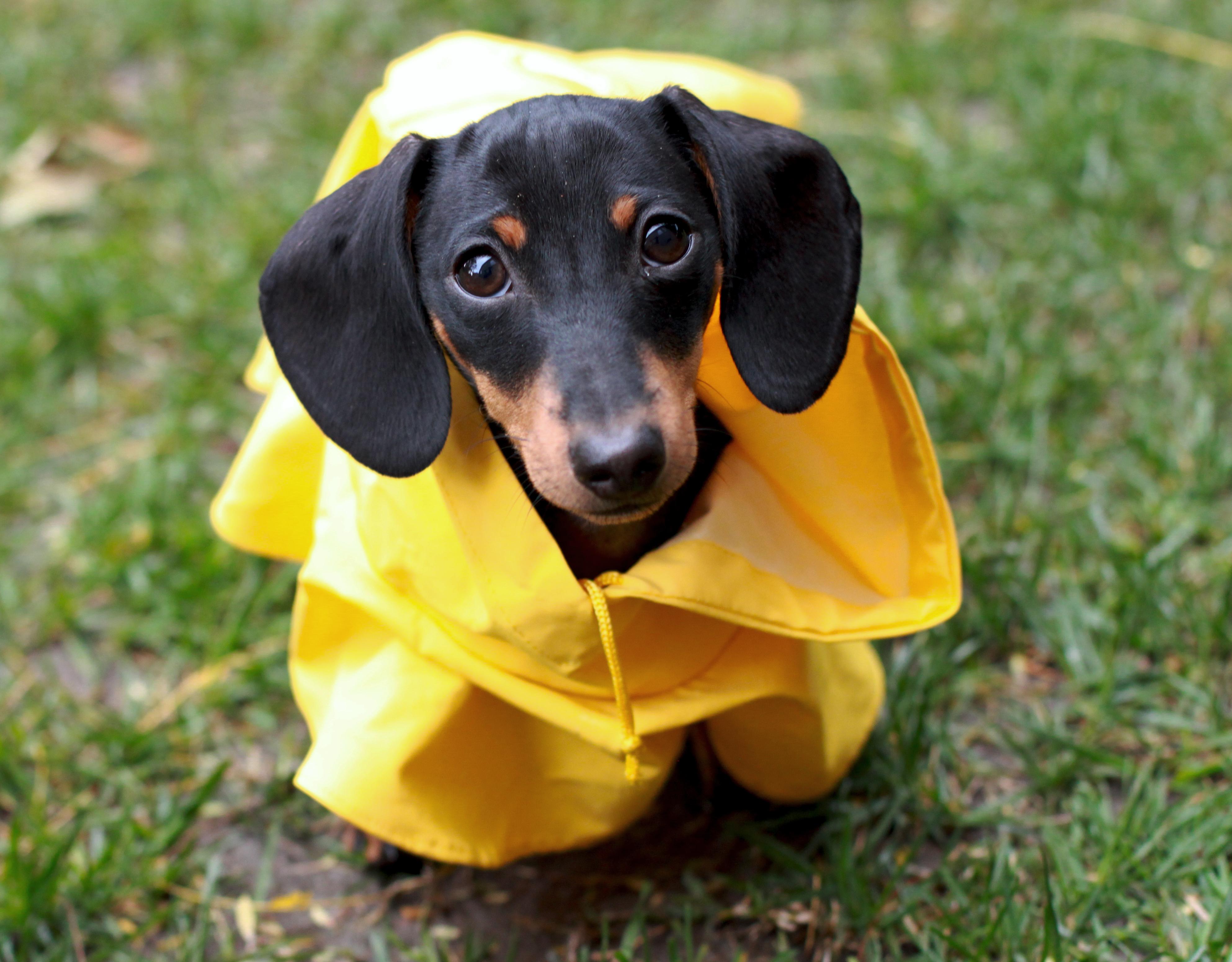 Dog Beach Coat
