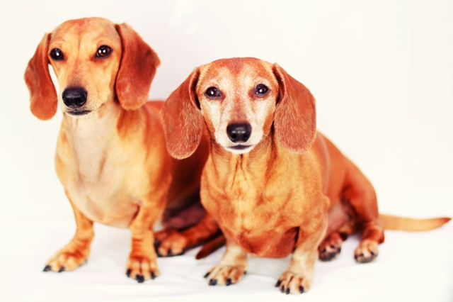 Milo & Rufus | December 2012.  Photo by: Johnny Ortez-Tibbels