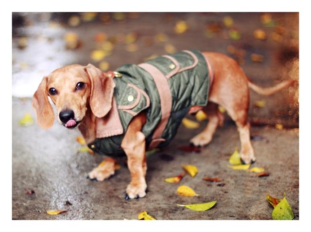 Milo | November 2012.  Photo by: Johnny Ortez-Tibbels