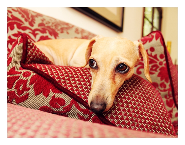 Maggie | February 2011.  Photo by: Johnny Ortez-Tibbels