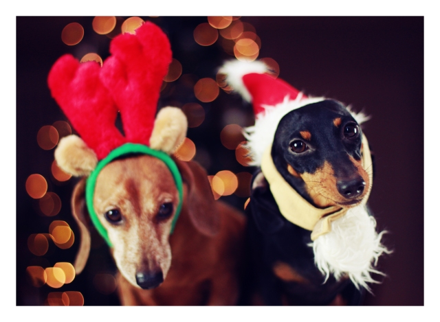 Rufus & Emily | December 2012.  Photo by: Johnny Ortez-Tibbels