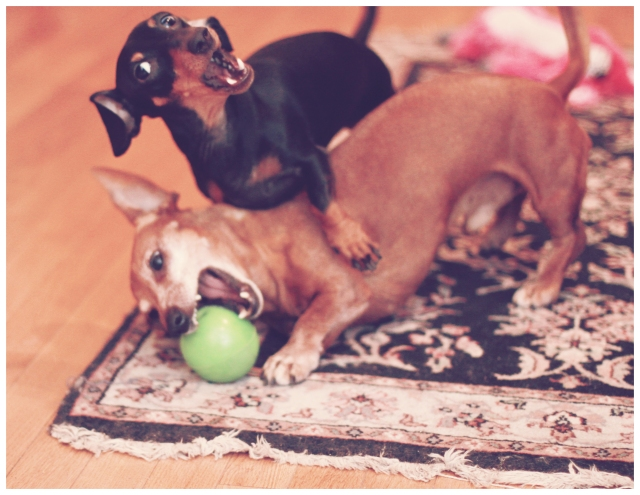 Rufus & Emily | January 2013.  Photo by: Johnny Ortez-Tibbels