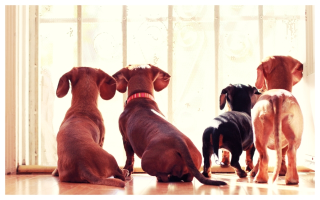 Rufus, Gracie, Emily & Milo | March 2012.  Photo by: Johnny Ortez-Tibbels