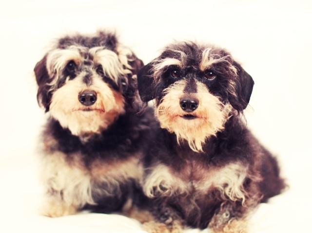 Sammy & Sophie | February 2013.  Photo by: Johnny Ortez-Tibbels