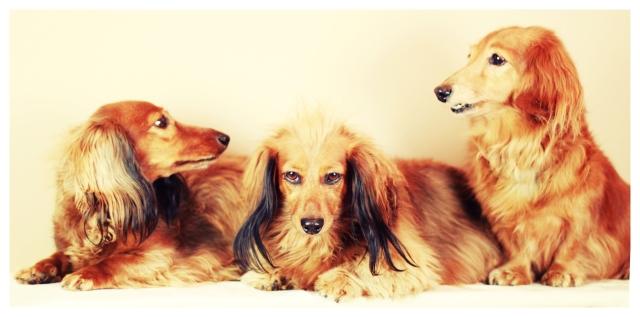Kayla, Daisy & Sammy | February 2013.  Photo by: Johnny Ortez-Tibbels