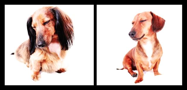 Bella & Peanut | April 2011.  Photo by: Johnny Ortez-Tibbels ©
