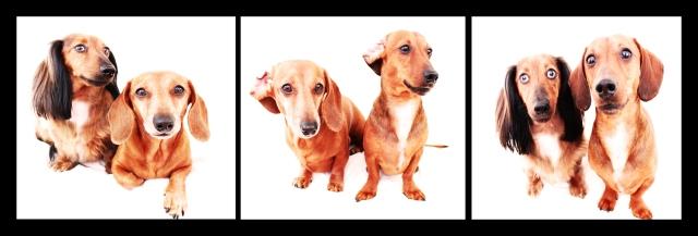 Bella, Peanut & Rufus | April 2011.  Photo by: Johnny Ortez-Tibbels ©