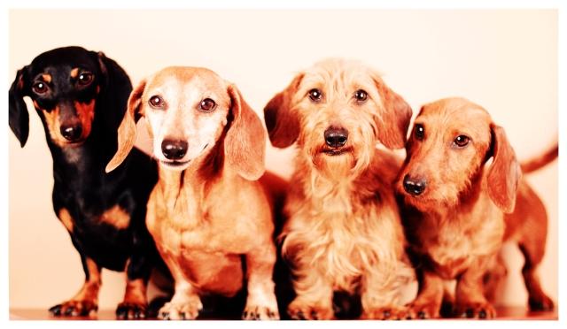 Emily, Rufus, Harold & Benny   February 2013.  Photo by: Johnny Ortez-Tibbels ©