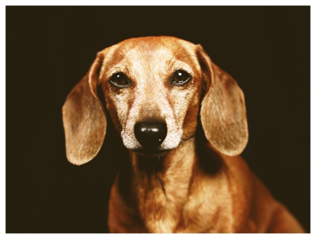 Rufus | March 2012.  Photo by: Johnny Ortez-Tibbels ©