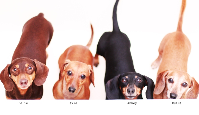 Polie, Dexie, Abbey & Rufus | May 2013.  Photo by: Johnny Ortez-Tibbels ©