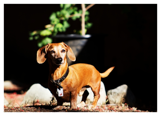 Rufus | June 2013.  Photo by: Johnny Ortez-Tibbels ©