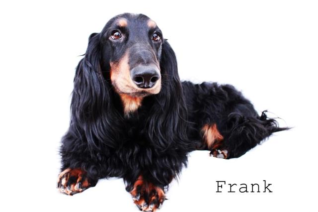 Frank | 2011.  Photo by: Johnny Ortez-Tibbels ©