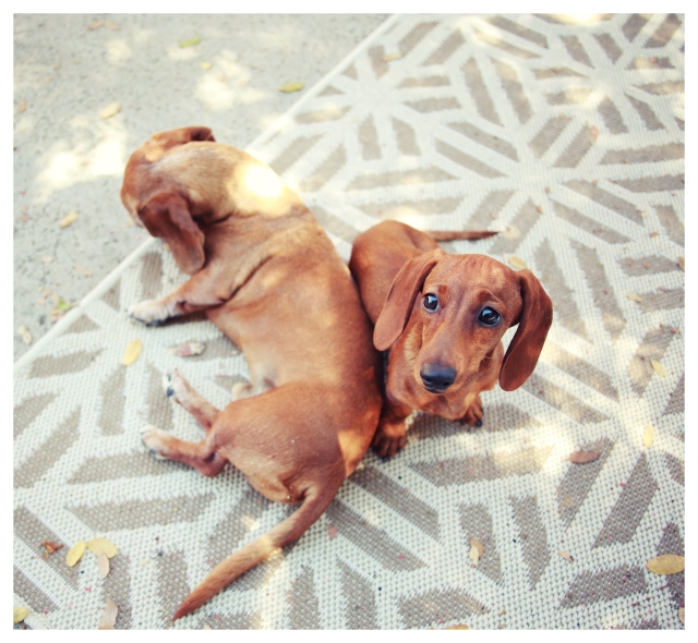 Rufus & Lily | September 2013.  Photo by: Johnny Ortez-Tibbels ©