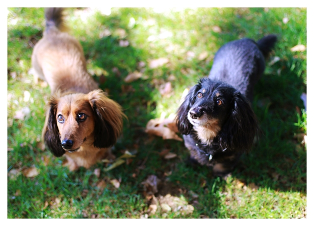Oscar & Meyer | October 2013.  Photo by: Johnny Ortez-Tibbels ©