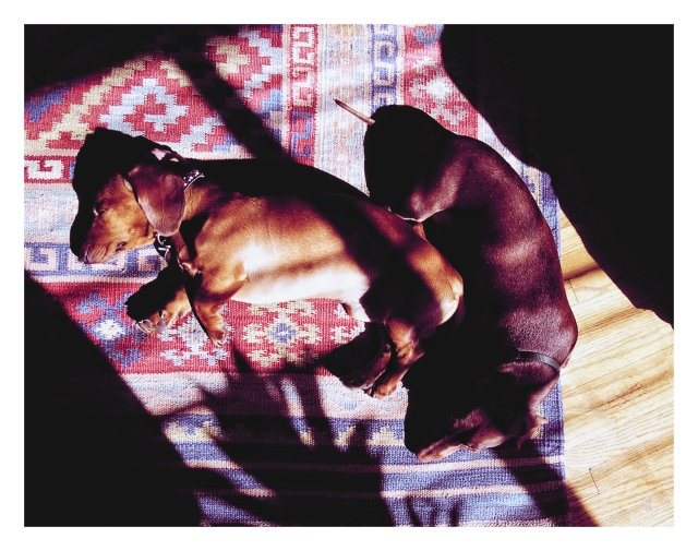 Rufus & Benny | September 2006.  Photo by: Johnny Ortez-Tibbels ©
