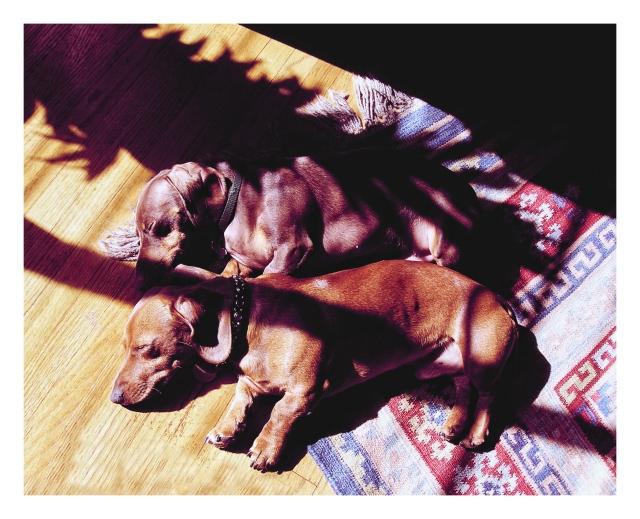 Rufus & Benny | September 2006.  Photo by: Johnny Ortez-Tibbels ©