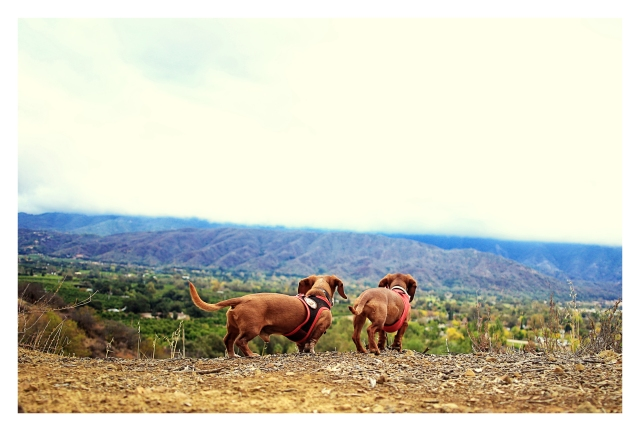 Rufus & Lily   November 2013.  Photo by: Johnny Ortez-Tibbels ©