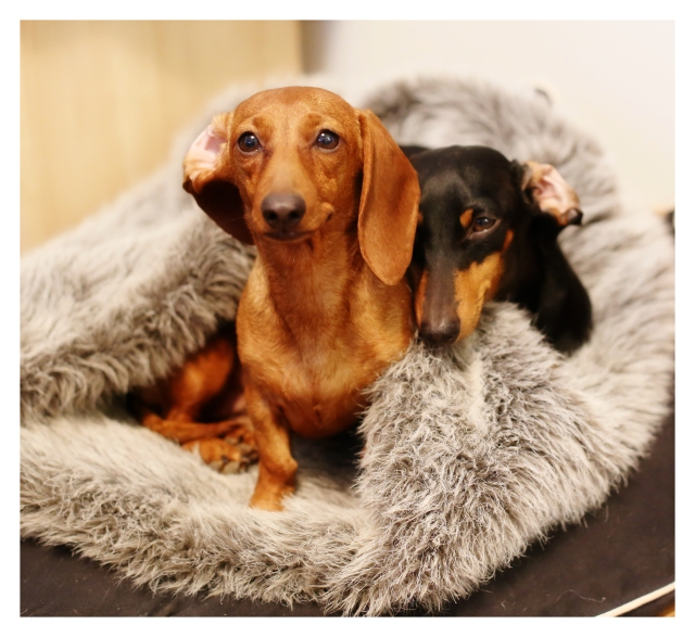 Dog Beds Rufusontheweb