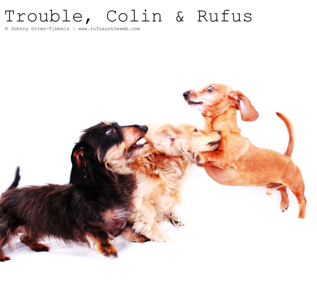Trouble, Colin & Rufus | June 2011.  Photo by: Johnny Ortez-Tibbels ©