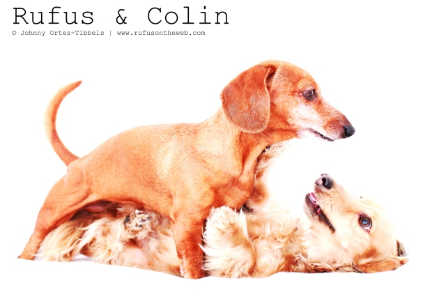 Rufus & Colin | June 2011.  Photo by: Johnny Ortez-Tibbels ©