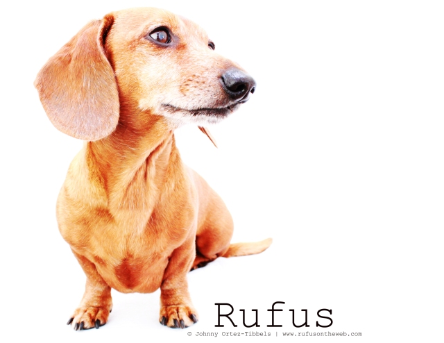 Rufus | May 2011.  Photo by: Johnny Ortez-Tibbels ©