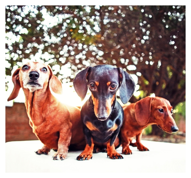 Rufus, Emily & Lily | December 2013.  Photo by: Johnny Ortez-Tibbels ©