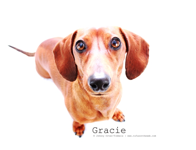 Gracie | February 2011.  Photo by: Johnny Ortez-Tibbels ©