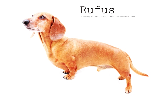 Rufus | February 2011.  Photo by: Johnny Ortez-Tibbels ©