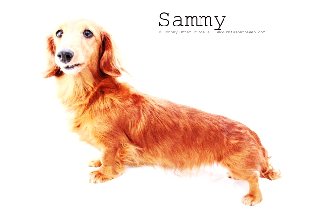 Sammy | February 2011.  Photo by: Johnny Ortez-Tibbels ©