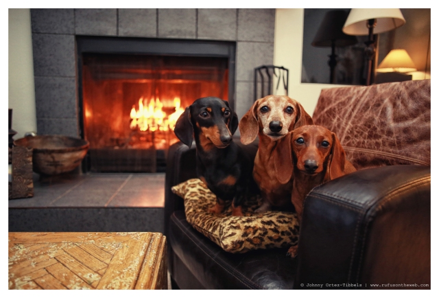 Emily, Rufus & Lily   January 2014.  Photo by: Johnny Ortez-Tibbels ©