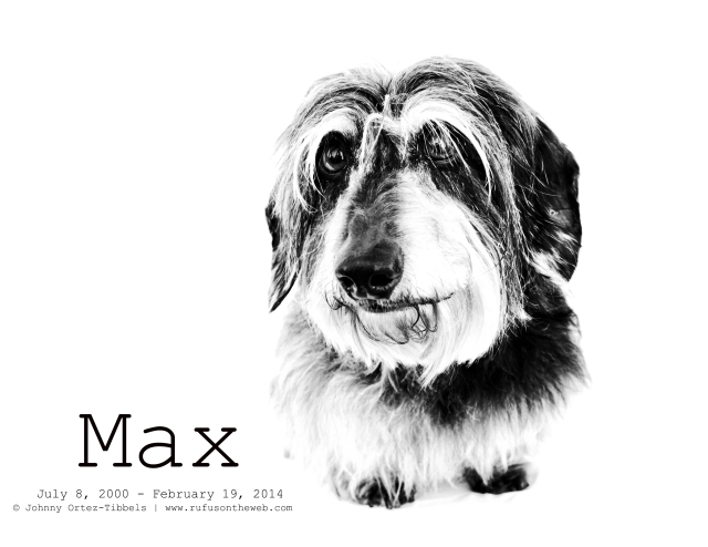 Max | April 2011.  Photo by: Johnny Ortez-Tibbels ©