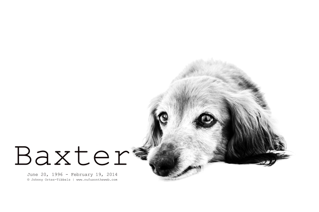 Baxter | May 2011.  Photo by: Johnny Ortez-Tibbels ©