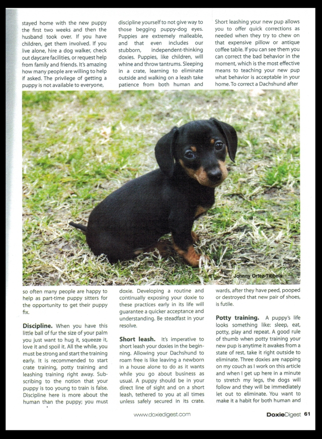 Doxie Digest Article by: Johnny Ortez-Tibbels ©
