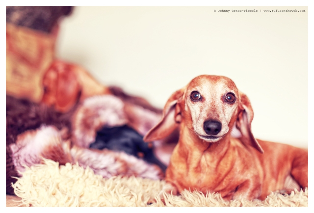 Rufus | February 2014.  Photo by: Johnny Ortez-Tibbels ©