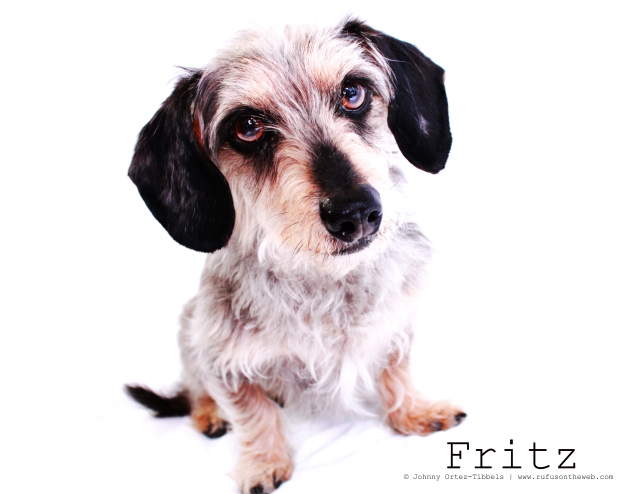 Fritz 2011 | Photo by: Johnny Ortez-Tibbels ©