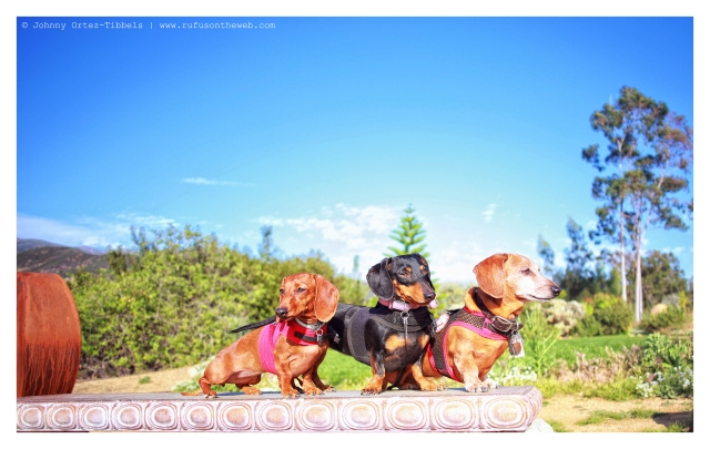 Lily, Emily & Rufus | March 2014.  Photo by: Johnny Ortez-Tibbels ©