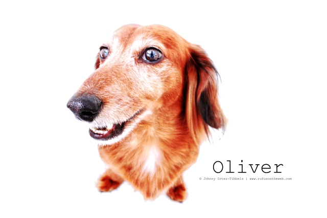 Oliver | 2011.  Photo by: Johnny Ortez-Tibbels ©