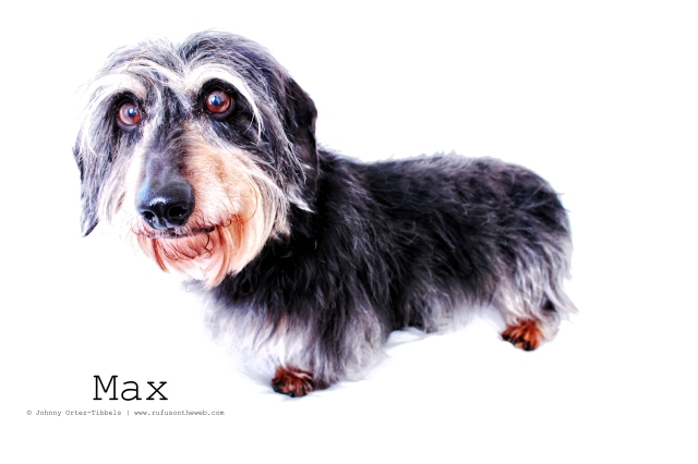 Max | 2011.  Photo by: Johnny Ortez-Tibbels ©