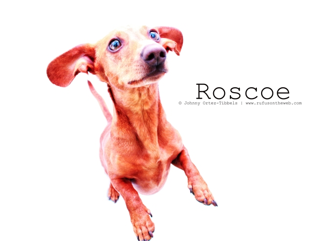 Roscoe | 2011.  Photo by: Johnny Ortez-Tibbels ©