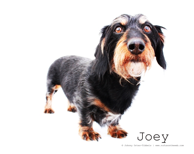 Joey. Photo by: Johnny Ortez-Tibbels ©