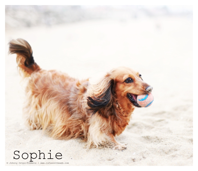 Sophie.  Photo by: Johnny Ortez-Tibbels ©