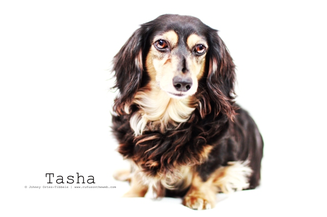 Tasha | April 2013.  Photo by: Johnny Ortez-Tibbels ©