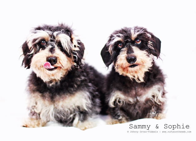 Sammy & Sophie | February 2013.  Photo by: Johnny Ortez-Tibbels ©