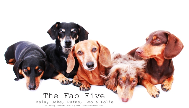 Kaia, Jake, Rufus, Leo & Polie | 2011.  Photo by: Johnny Ortez-Tibbels ©