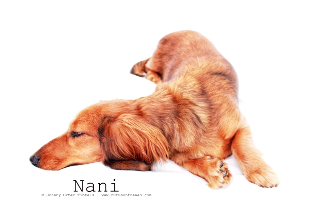 Nani | March 2011.  Photo by: Johnny Ortez-Tibbels ©
