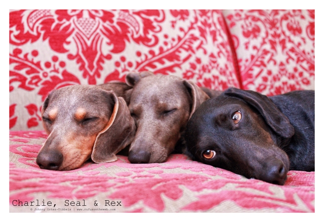 Charlie, Seal & Rex | March 2011.  Photo by: Johnny Ortez-Tibbels ©