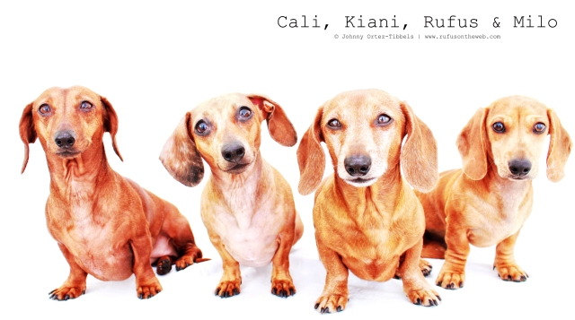 Cali, Kiani, Rufus & MIlo | July 2011.  Photo by: Johnny Ortez-Tibbels ©