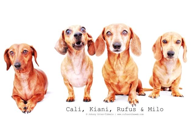 Cali, Kiani, Rufus & MIlo | July 2011.  Photo by: Johnny Ortez-Tibbels ©