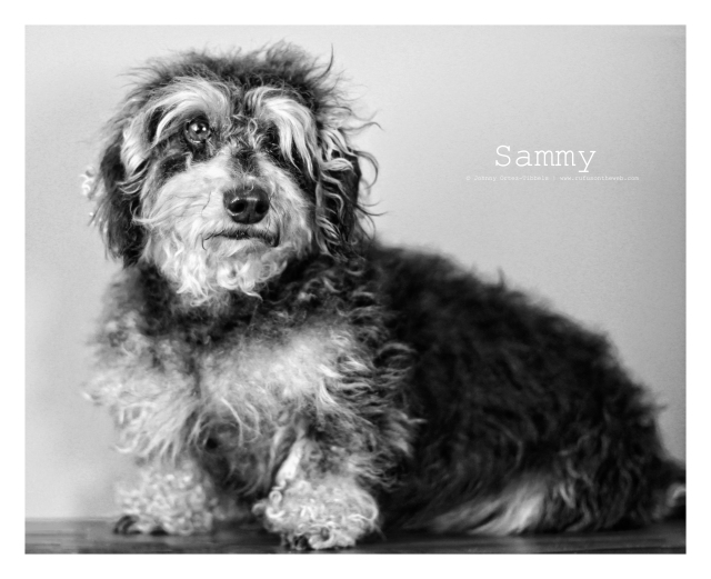 Sammy | July 2013.  Photo by: Johnny Ortez-Tibbels ©