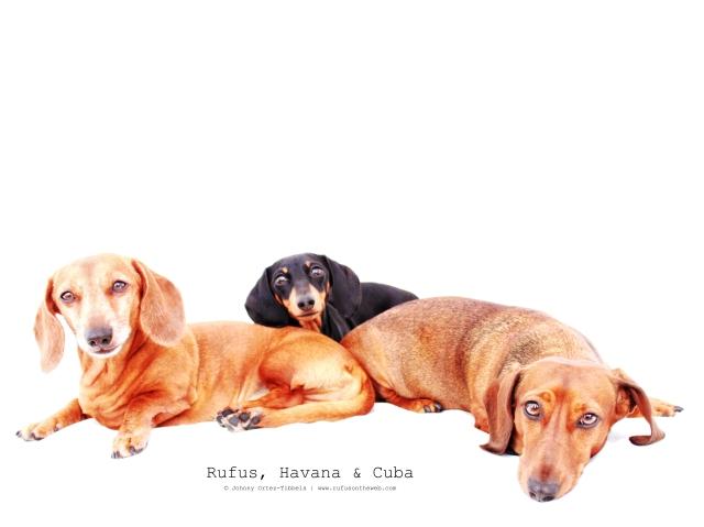 Rufus, Havana & Cuba | April 2011.  Photo by: Johnny Ortez-Tibbels ©